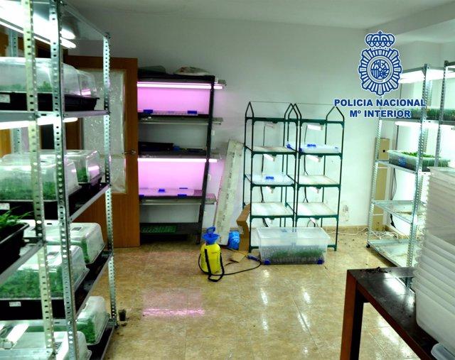 Desmantelada banda criminal especializada en el tráfico de drogas
