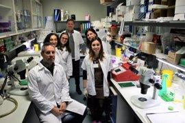 Investigadores de la US descubren que hay células madre neurales que se convierten en vasos sanguíneos