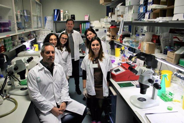 Grupo de investigación de la Universidad de Sevilla