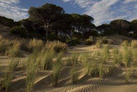 WWF refuta el informe del Estado sobre Doñana respecto a garantías ambientales a pesar del dragado o el proyecto minero