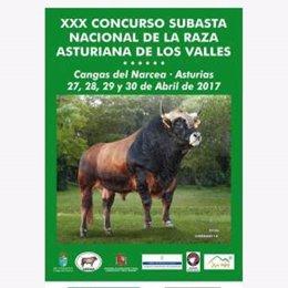 Concurso Asturiana de los Valles en Cangas del Narcea