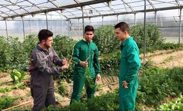 Cultivo en un invernadero de centro de formación de Don Benito