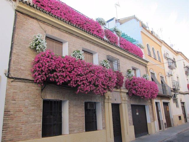 Balcones floridos durante el mayo cordobés