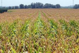 C-LM anuncia un frente común con las comunidades de regantes que garantice la rentabilidad de la agricultura
