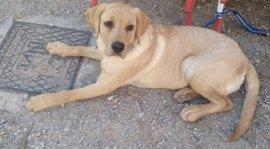 Comienza este martes el periodo voluntario para registrar el ADN de los perros en Málaga capital