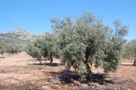 El polen del olivo alcanza nivel extremo por primera vez esta temporada