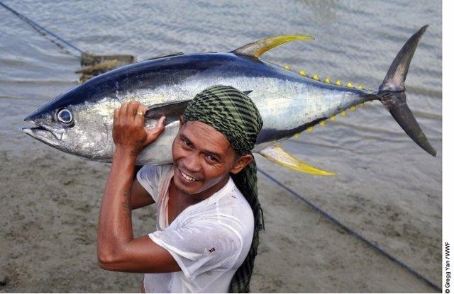 Pescador de atún de aleta amarilla en Filipinas