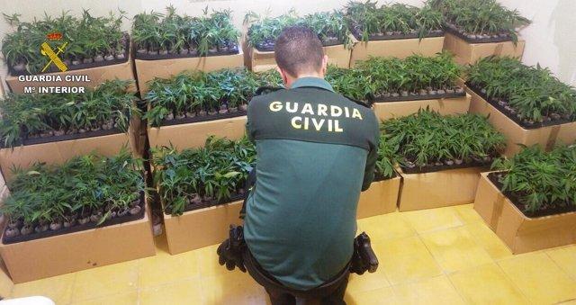 Interceptan una furgoneta con 2.160 esquejes de marihuana en Tarragona