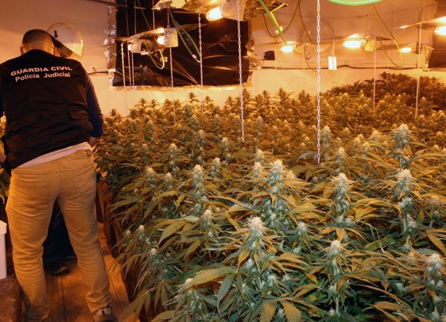 La Guardia Civil desmantela un invernadero clandestino de marihuana
