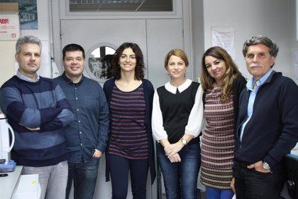 Investigadores del Cebas demuestran el papel crucial de la flora intestinal para prevenir riesgo cardiovascular