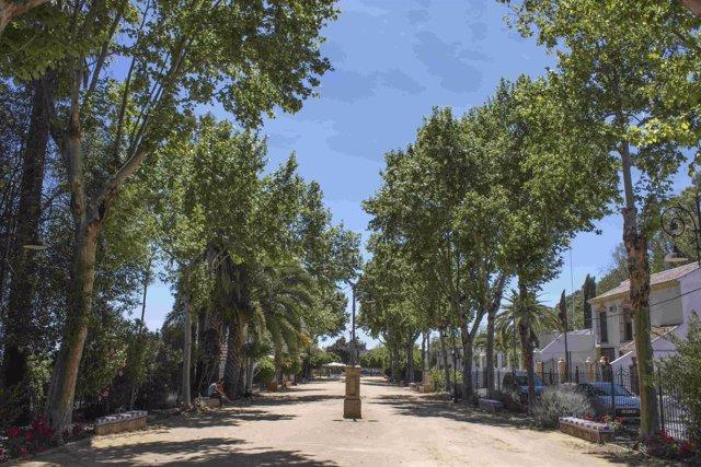 Alameda Alfonso XIII de  Carmona