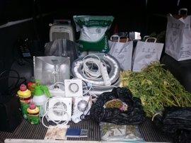 Detenido por instalar en su domicilio una plantación de marihuana