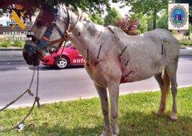 Investigado en Badajoz por un presunto delito de maltrato de dos caballos