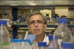 El científico español del CSIC Ginés Morata nombrado miembro de la Royal Society