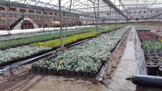 Vivero de plantas de la Diputación de Cáceres