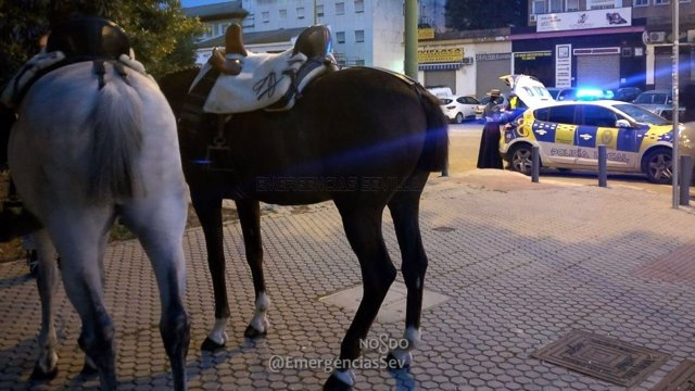 Caballos intervenidos por la Policía Local