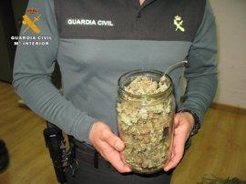 Un detenido y 23 plantas de marihuana intervenidas en una vivienda de Baena (Córdoba)