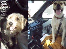 Policía Foral auxilia a dos perros encerrados en un vehículo a pleno sol en Beriáin