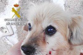 Detenido un vecino de Pinofranqueado por pegar una patada a un perro al que tuvo que practicarse la eutanasia