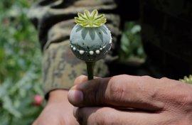 Aumenta la violencia provocada por la producción de amapola en México por la gran demanda de heroína en EEUU