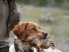 La prohibición de cortar el rabo a los perros se demora al incluir de nuevo el PP una reserva en el Senado