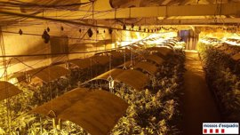 Tres detenidos por cultivar 4.500 plantas de marihuana en naves abandonadas de Lleida