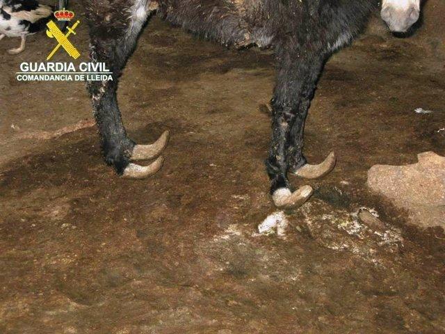 La Guardia Civil encontró en Juneda animales en malas condiciones