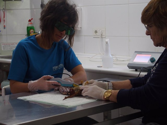 Tratamiento de laserterapia en un pájaro