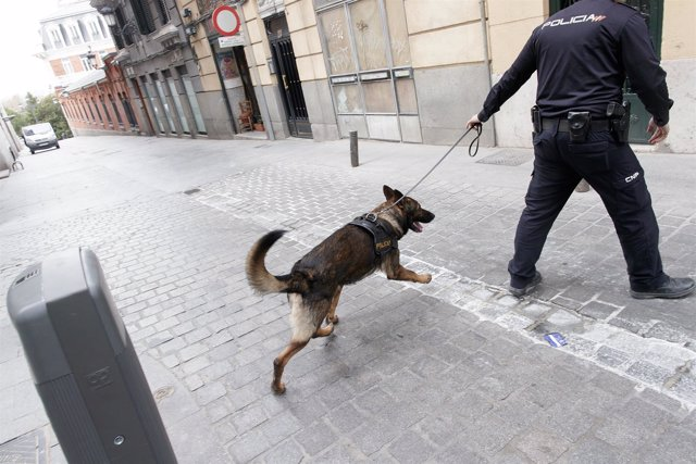 Guía canino, guías caninos, perro policía, perros policías
