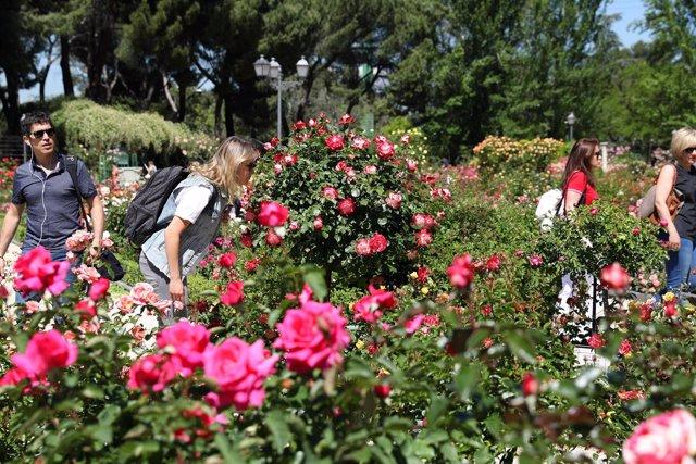 Rosas en la ciudad
