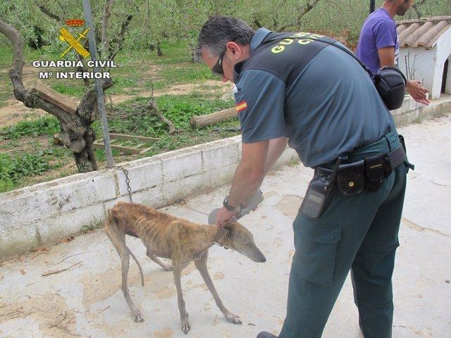 Perro maltratado atendido por la Guardia Civil