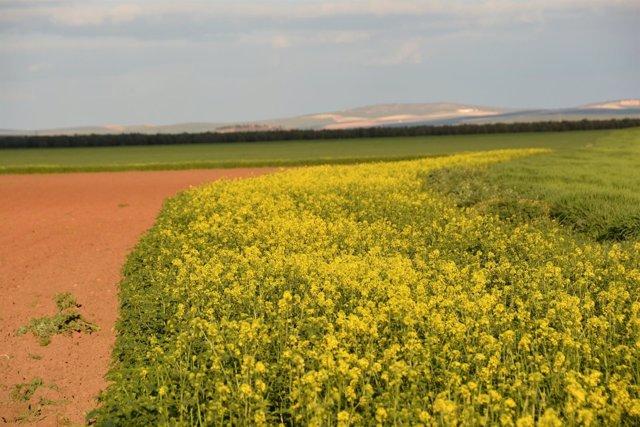 Asaja-Sevilla y Syngenta fomentan el incremento de la biodiversidad.