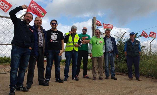 Piquete informativo en huelga del campo de Sevilla.