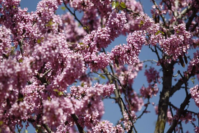 Buen tiempo, clima, altas temperaturas, temperatura, primavera, primaveral