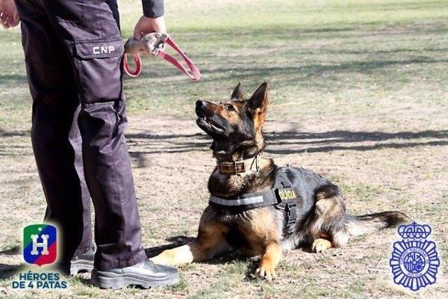 Perro policía de trabajo.