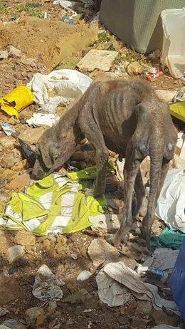 Rescatados una veintena de perros enfermos en una parcela insalubre