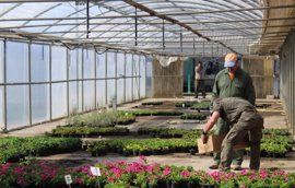 La campaña de la flor de la DPH reparte más de 50.000 plantas entre 71 municipios