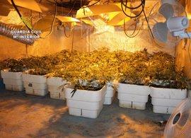 Detenido un joven con un centenar de plantas de marihuana que cultivaba en un invernadero de Murcia