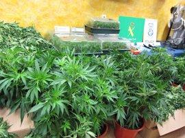 Seis detenidos en Segovia como parte de una organización criminal dedicada al tráfico de drogas en todo el país