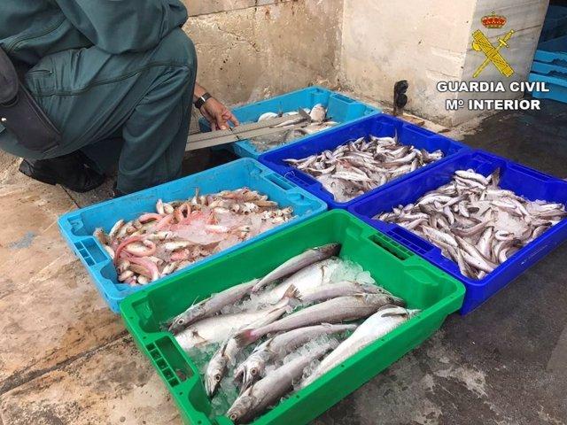 Pescado incautado por el Seprona