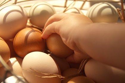 ¿Por qué los consumidores optan por huevos de gallinas en libertad?