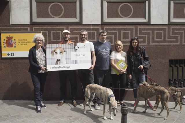 100.000 Firmas Para Pedir La Prohibición De La Caza Con Galgos