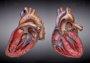 Foto: Las enfermedades cardiovasculares causan un tercio de las muertes en todo el mundo