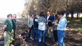 Tareas de prevención de incendios forestales en 1.560 hectáreas de montes públicos en Cádiz