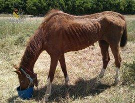 Investigado por abandonar en un paraje a su caballo atado, sin agua y apenas comida
