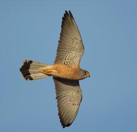 Extremadura realizará un estudio para conocer el impacto económico del turismo ornitológico