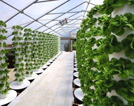 La Universidad de Murcia participa en un proyecto para producir hortalizas en contenedores cerrados
