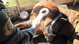 Investigan a una mujer por la muerte de su caballo por inanición en Xixona