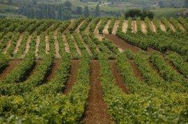 La Rioja se podría enfrentar a un aumento del riesgo por inundaciones en sus viñedos