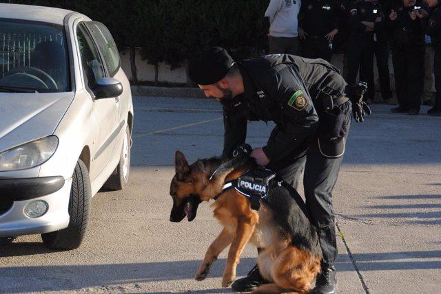 Unidad canina Alberic
